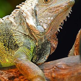 Fin de mue by Gérard CHATENET - Animals Reptiles