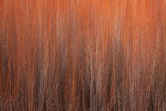 """Photo: So this is my first experiment with vertical panning. I started with a close up of the red plants you can see in +Jeremy Cram's shot """"Desert Layers"""" and +Dustin Gent's """"Fire Storm"""" and panned vertically to create an abstract closeup.  Thanks in advance for your thoughts!"""