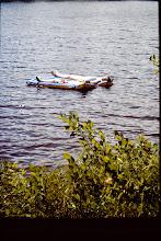 Photo: Sunning on rafts.