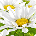 My Flower 3D Live wallpaper Icon
