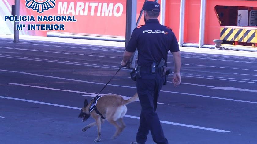 Un agente inspecciona junto con un perro del Cuerpo Nacional de Policía.