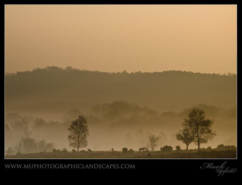 Photo: Morning Horseys