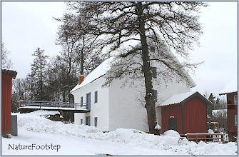 Photo: Snow white NF Photo 130218, Boda Kvarn http://nfbild2.blogspot.se/2013/02/snow-white.html