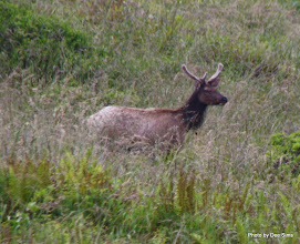 Photo: (Year 2) Day 355 - An Elk