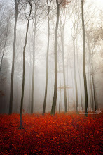 Photo: Leafless... Have a great week! www.naturephotographie.com #autumn  #forest
