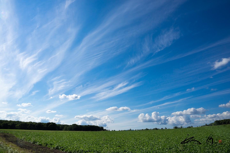 空高くたなびく巻雲