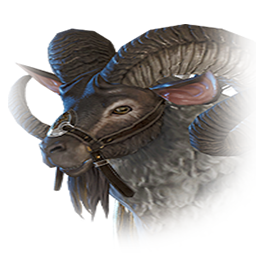 戦闘用山羊