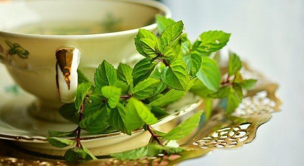 Peppermint, Peppermint Tea, Mint, Tee