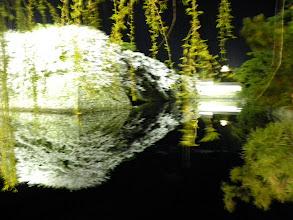 Photo: 彦根城の夜桜2010