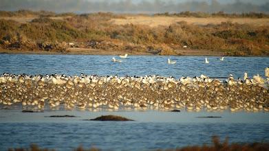 Photo: Djerba avifauna inverno (Jarba Ajim)