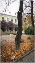 Photo: Ciuperca pe un castan salbatic, de pe Str. Bogdan Petriceicu Hasdeu - 2016.10.29