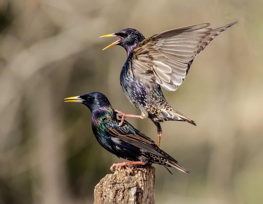 by David Hopper - Novices Only Wildlife (  )