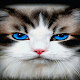 Blue Eyes Cat LWP Download for PC Windows 10/8/7