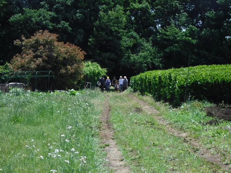 こんな田舎道をリアカーをひいてくるみなさん。うしの畑に歩いて移動です。