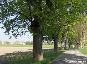 Photo: wunderschöne Baumallee bei Rohrenfels