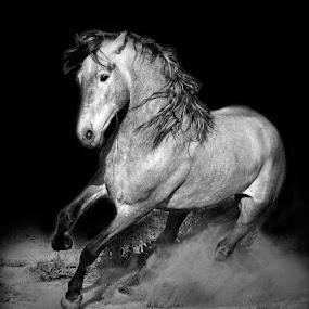 by Michelle Hunt - Black & White Animals (  )