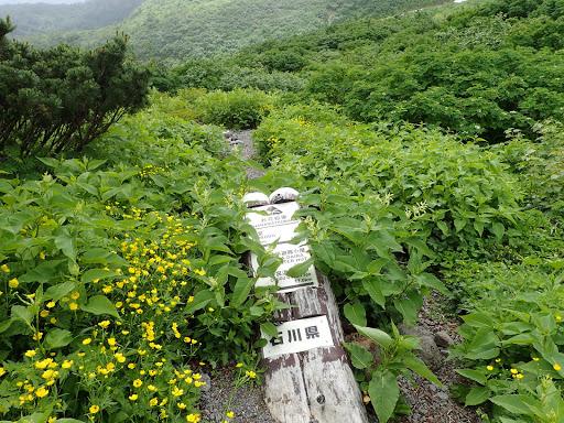 お花松原に到着(ミヤマキンポウゲ)