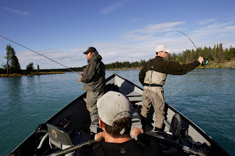 Photo: Alaska Drift Away Fishing running a drift for rainbow trout on the middle Kenai river.