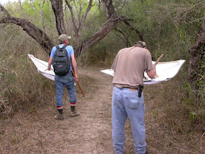 Photo: Beating along the south end of Jaguarundi Trail, Santa Ana NWR