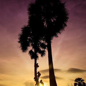 Climb coconut tree.JPG