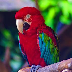 by Putra Bustami - Animals Birds