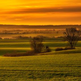 by Klaus Müller - Landscapes Prairies, Meadows & Fields ( wavy, field, sky, sunset, landscape, golden,  )
