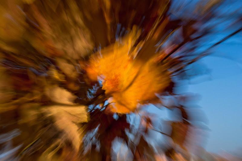 è scoppiato l'autunno di lorella