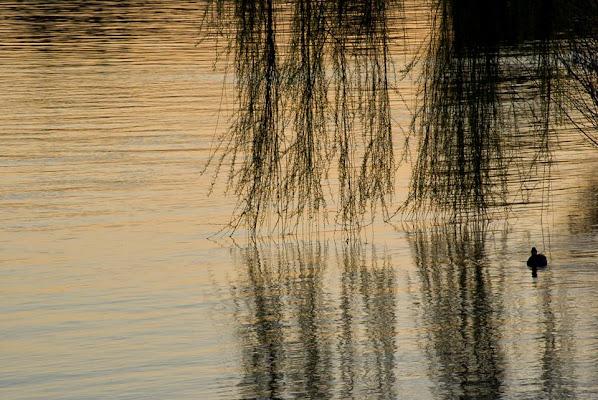 Sul lago dorato... di Tiziana Detoni