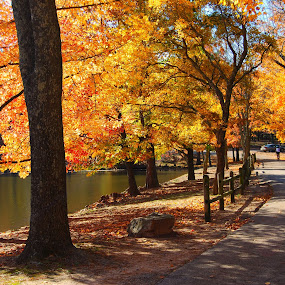 Fall Days by Jessica Simmons - City,  Street & Park  City Parks ( park, fall, trees, lake, yellow,  )
