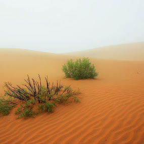 Foggy Dunes by Salman Ahmed - Landscapes Deserts ( foggy, dunes, desert, nature, fog, bushes, weather )