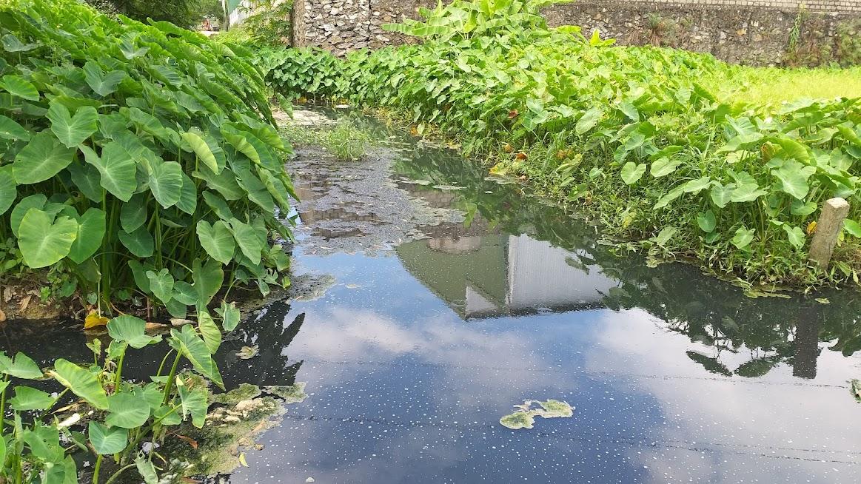 Con mương dẫn nước tưới tiêu nông nghiệp trở nên đen ngòm
