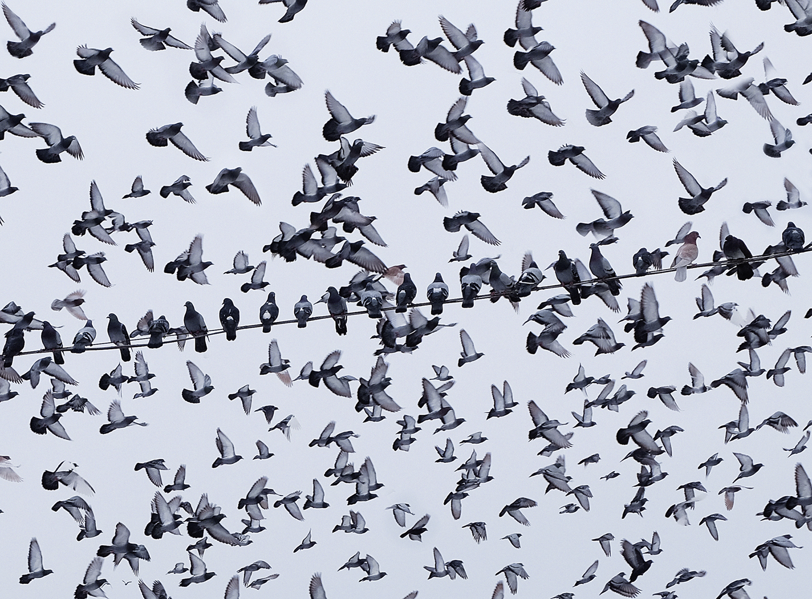 Invasion di mt antona