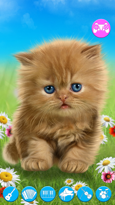 Talking baby cat. - screenshot