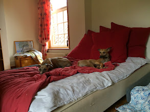 Photo: Flora and Annabel Whippet