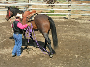Photo: Now we will try sensitizing with the rope in various positions on the leg, but WITH movement. This is so critical. Often times horse tolerate at a stand still, but get bothered with movement.