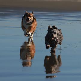 Best. Day. Ever. by Gary Winterholler - Animals - Dogs Running