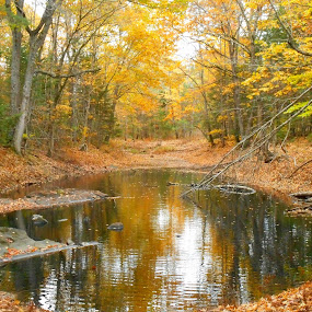 Autumn duck pond in the woods by Sandy Davis DePina - Landscapes Waterscapes ( autumn, foliage, fall, wildlife, forest, pond )