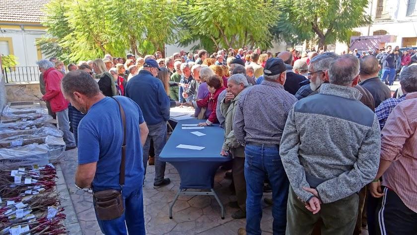 Éxito de participación en la jornada donde se entregaron 1.200 parras.
