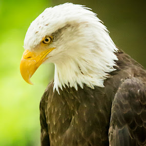 The Stare by Scott Turnmeyer - Animals Birds