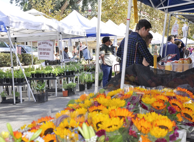 Shopper browsing flowers and other plants at the Claremont Farmers Market
