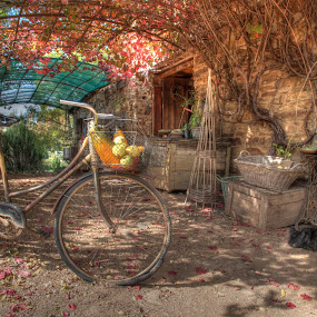 Sleepy Farm Dog by Brett Florence - Digital Art Places ( farm, hdr, sleepy, dog )