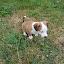 Wee Willie by Ingrid Bjork - Animals - Dogs Puppies ( puppy, dog, baby animals,  )