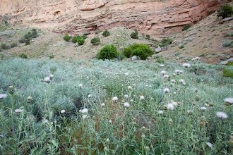 Photo: Scenic image up Jones Creek. Dinosaur National Monument in northeastern Utah.