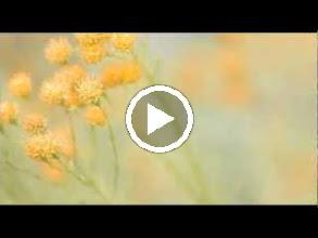 Video: A. Vivaldi  Domine ad adjuvandum me festina [responsory] in G major (RV 593) -