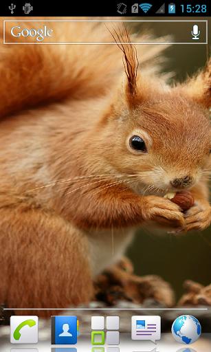 Squirrels Live Wallpaper