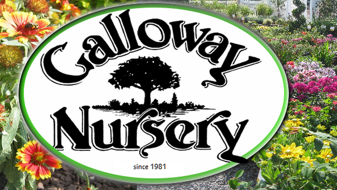 Galloway Nursery Whole Retail Plant In Egg