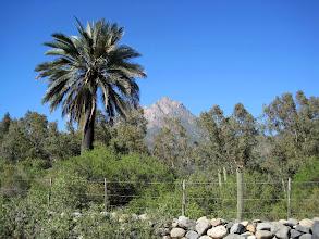 Photo: Day 2 - La Campana National Park (Chile)