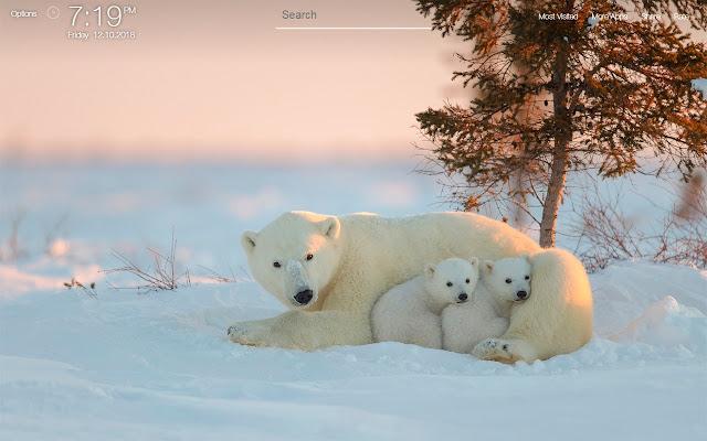 Polar Bear Wallpapers FullHD New Tab