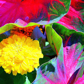 Flower and Caladiums by Jay Rives - Nature Up Close Flowers - 2011-2013 ( macro, caladiums, colorful, close up, flower )
