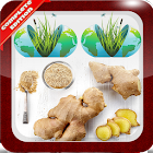 Medicinal Plants Herbs icon